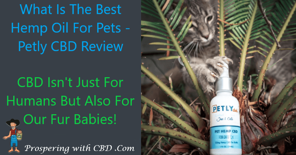 What Is The Best Hemp Oil For Pets - Petly CBD Review